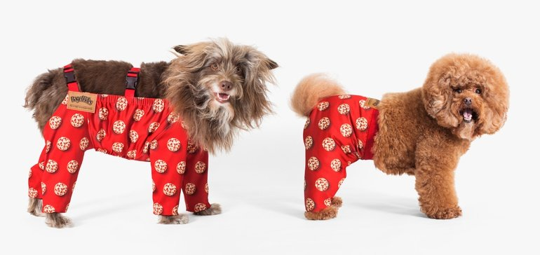Dogs in pants