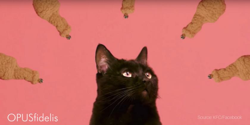 KFC's latest marketing stunt- livestreaming cats